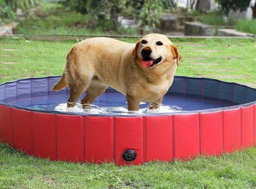 Piscina para perros | Las mejores piscinas para perros