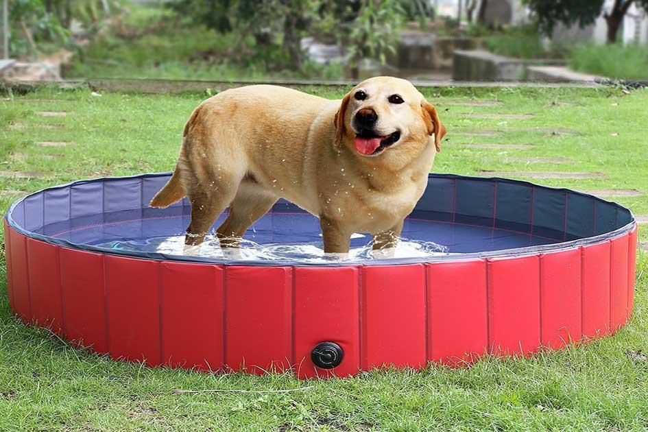 piscinas-para-perros